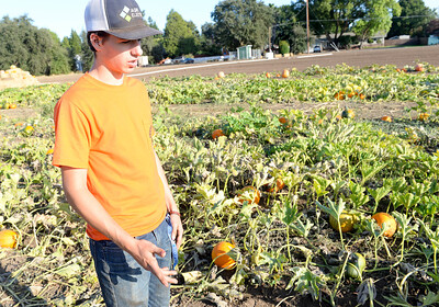 Chico High sophomore Diego Campos,16, speaks about the pumpkin growing process at the pumpkin patch off of Henshaw Avenue on Thursday in Chico. (Matt Bates -- Enterprise-Record)