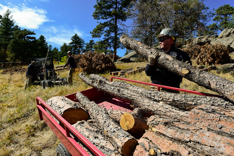 Forest Health Hall Ranch Open Space Tree Removal