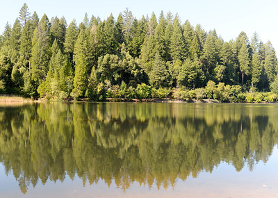 Pine trees can be seen reflected off the surface of Madrone Lake during the Berry Creek forest health tour Tuesday in Berry Creek. (Matt Bates -- Enterprise-Record)