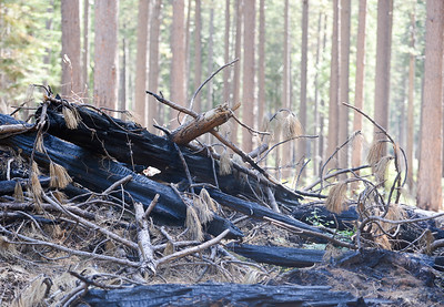A pile of charred wood can be seen in a clearing during the Berry Creek forest health tour Tuesday in Berry Creek. (Matt Bates -- Enterprise-Record)