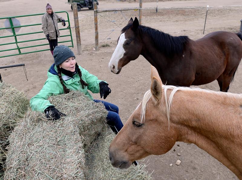 Colorado Horse Rescue Evacuation