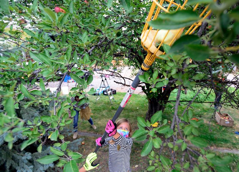 Community Fruit Rescue