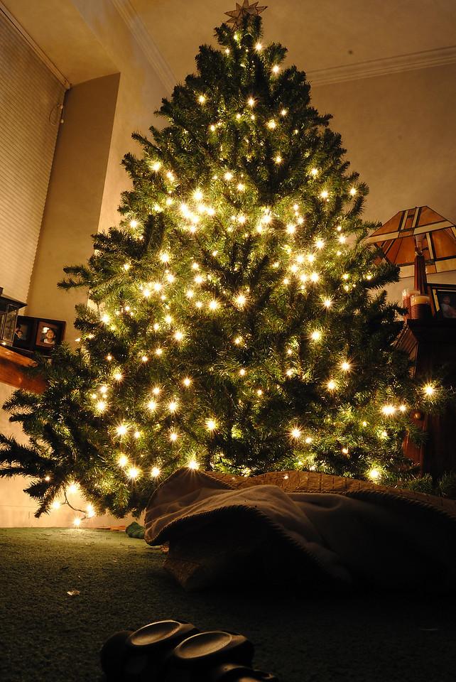 12/7/09 Christmas Tree up with lights