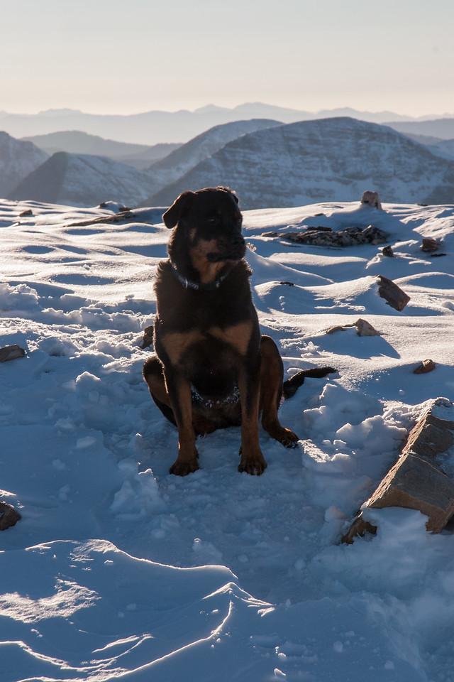 Kota on Summit of Bald Mountain (el. 11,942 ft)