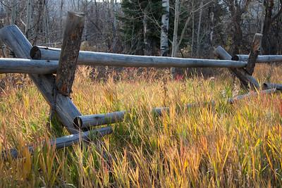 Fence grass