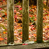 Rustic bench and Autumn leaves
