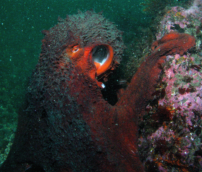 A wise old octopus once said,be gone scuba diver.