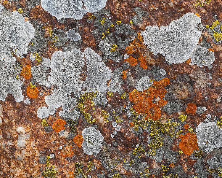 Lichens on granite boulders