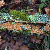 Lichens and more