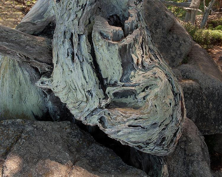 Monterey cypress swirls