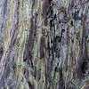 Lichens on Cypress