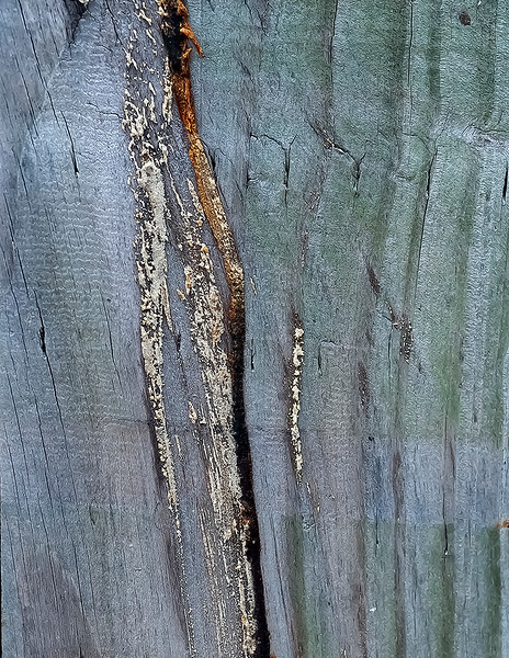 Wood cut - 12