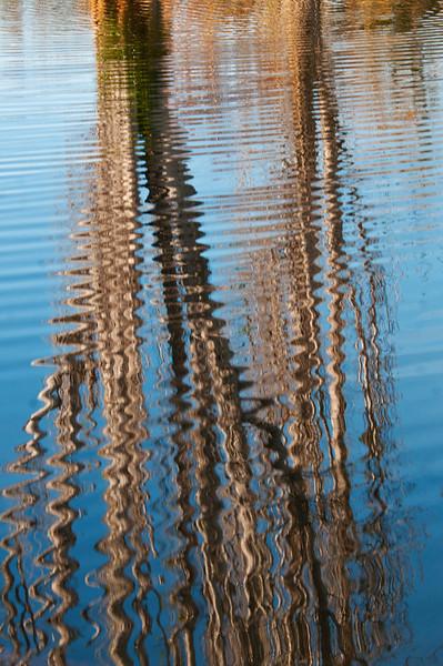 Reflections at Quail