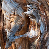 Interior pine abstract