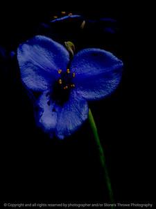 015-flower-wdsm-26may16-09x12-201-2507