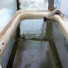 """Water"" in the Solar Tank for the Goats and Other Animals."