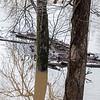 Goose Creek crested its banks in december 2018