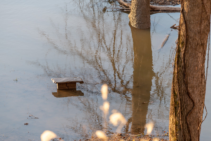 Bench emerges from the deluge