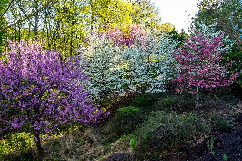 Sideyard in Bloom