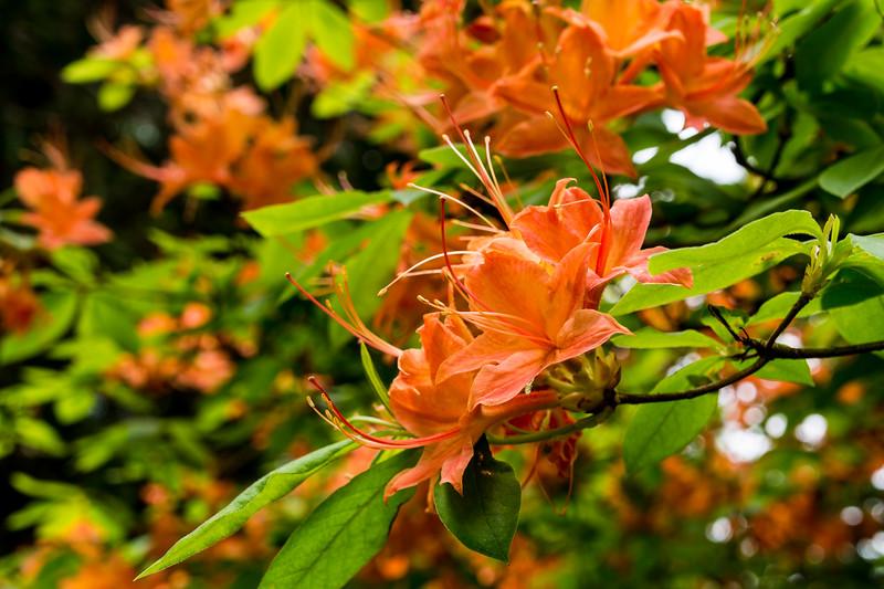Flowers Along Blue Ridge Parkway, VA