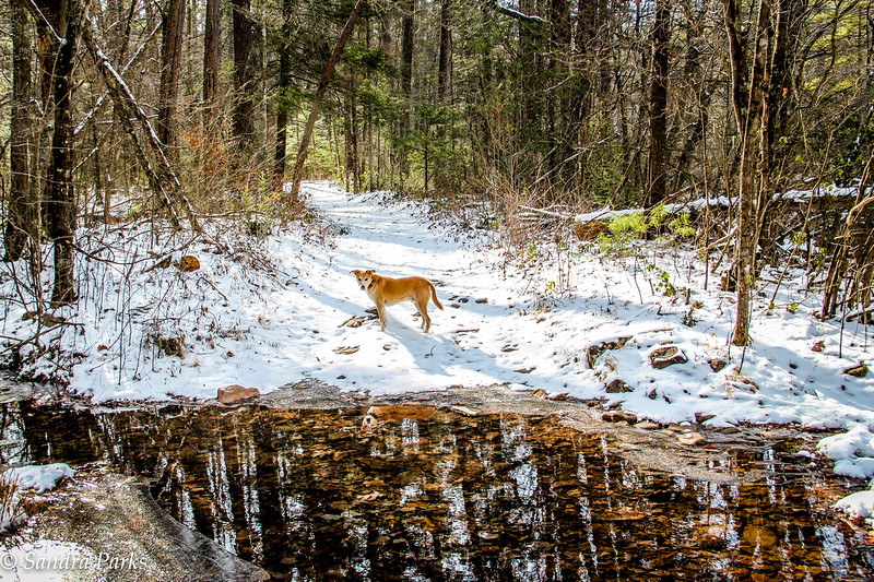 1-8-17: a cold and beautiful day to be in the woods