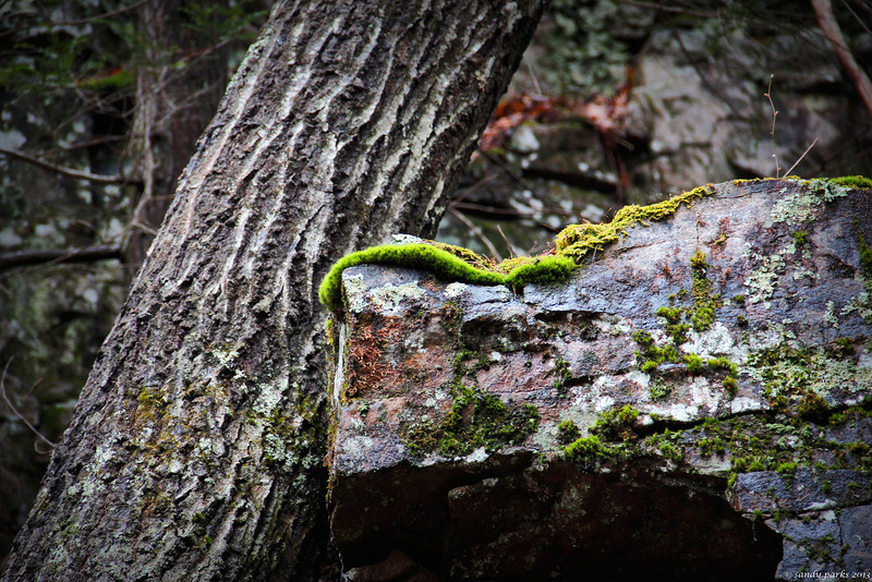 Moss on rock, with tree