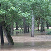 9-17-18: Flooding, Wildwood Park