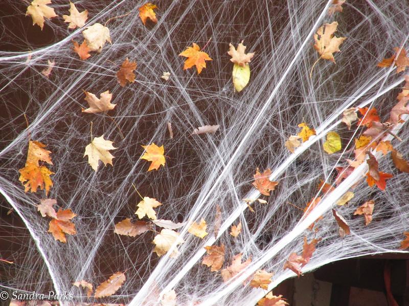 10-29-15: Halloween at Natural Chimneys
