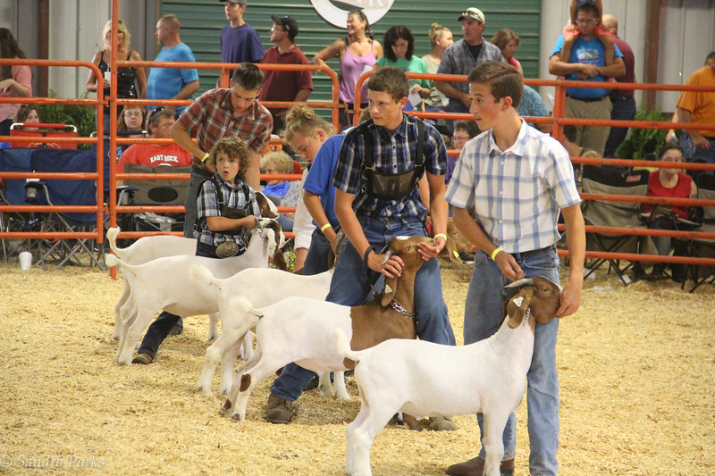 8-16-17: Goat judging at the county fair