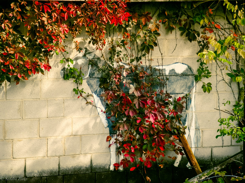10-09-2020: Cow, adorned by nature