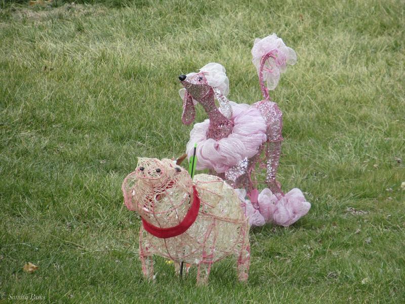 Christmas poodle?