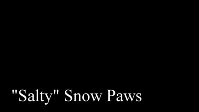 """Salty"" Snow Paws"