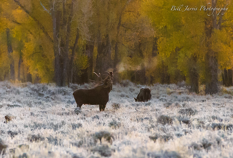 Frosty Morning Before Sunrise, Kelly, Wyoming