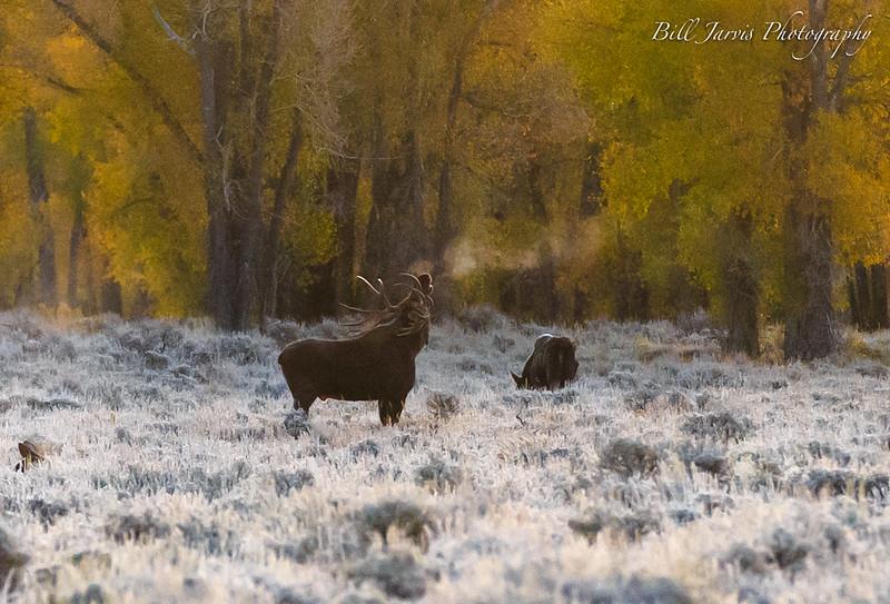 Frosty Morning Before Sunrise, Kelly, Wyoming