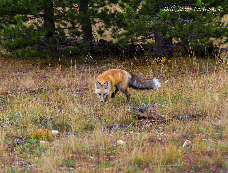 Hunting Breakfast