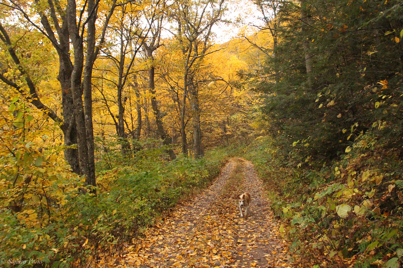 10-26-19: Hall Spring Hunter Access Road