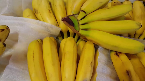 Shhh! Baby Bananas