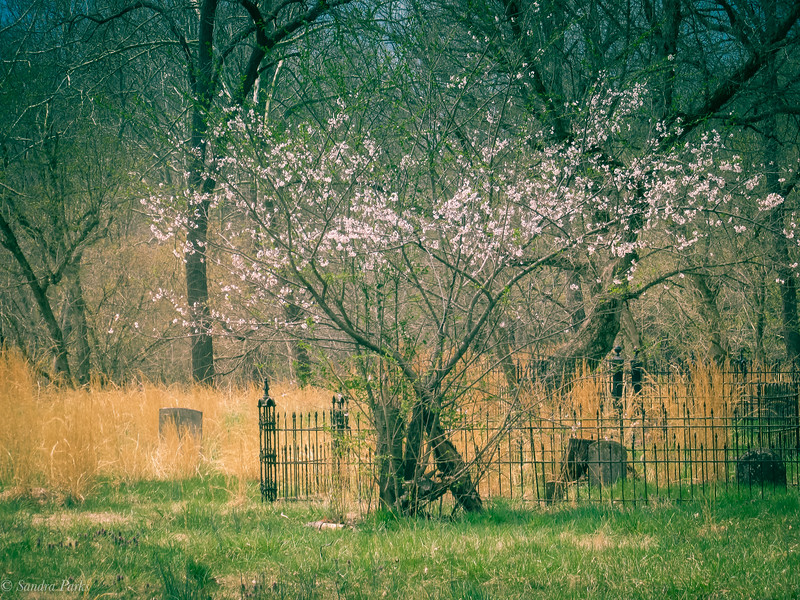 4-7-19: Graveyard in Spring, Port Republic