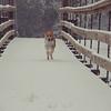 Max, running