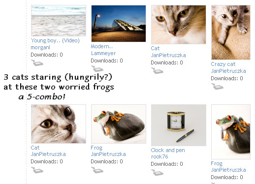 9/13/07: 3 cats staring (hungrily) at two worried frogs (a 5-photo combo!)
