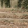 12-13-14: Steps, Natural Chimneys