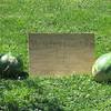 8-14-15: Watermelon for sale