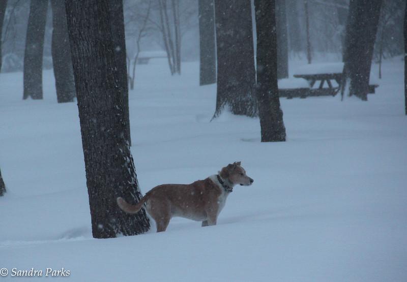 1-23-16: Max at Wildwood