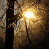 1-24-16: Light through the trees