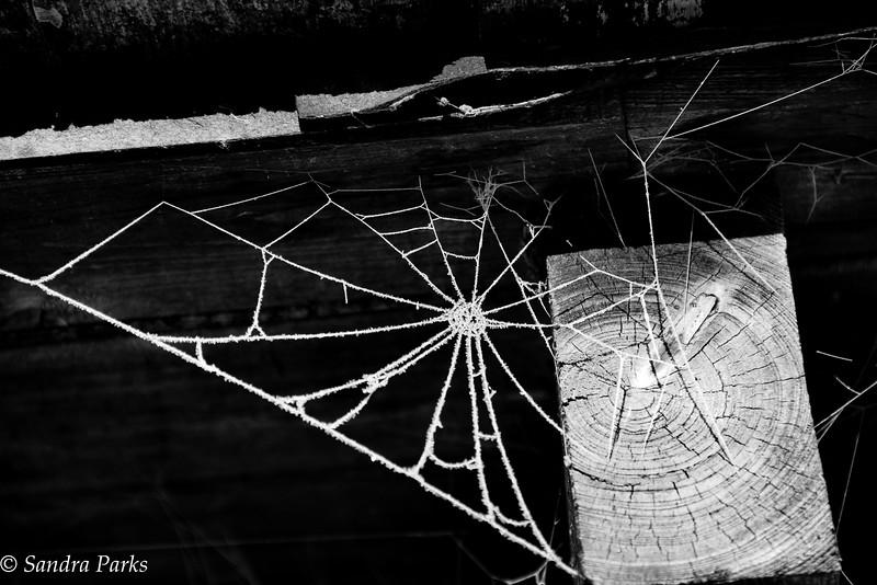 1-24-16: frosty webs