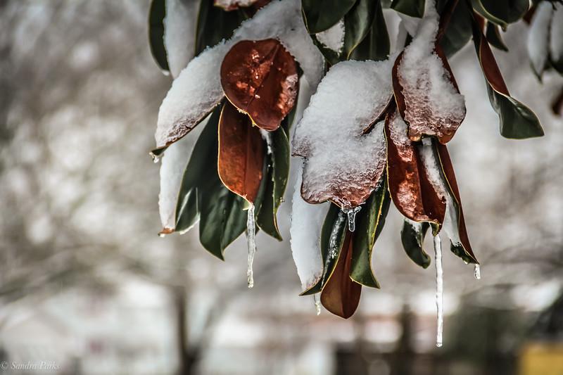 2-20-19: Magnolia on High Street.