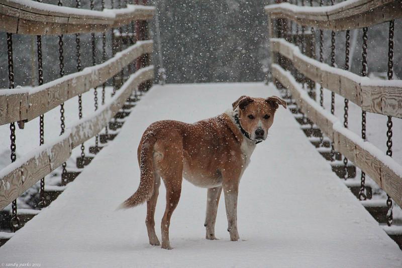 Max at Wildwood