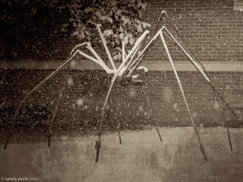 Spider, Bridgewater College