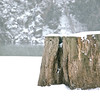 Stump, by the North RIver