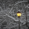 3-17-14- The Narnia light, at Wildwood.jpg